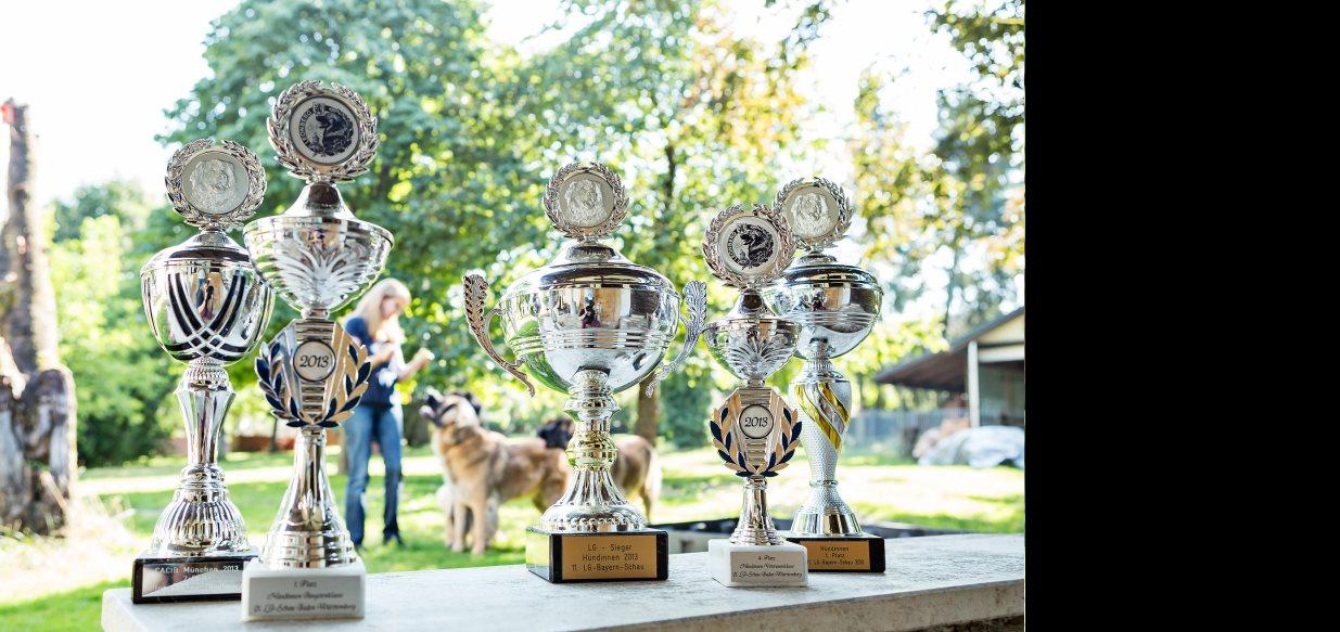 Wir sind <span>Stolz</span> auf unsere langjährige <i>Erfahrung</i> in der Leonberger Hundezucht