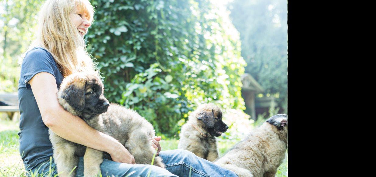 Viel <span>Freude</span> im Leben, aber keinen Ärger - hol dir einen <i>Leonberger</i> <p>Es ist so einfach</p>
